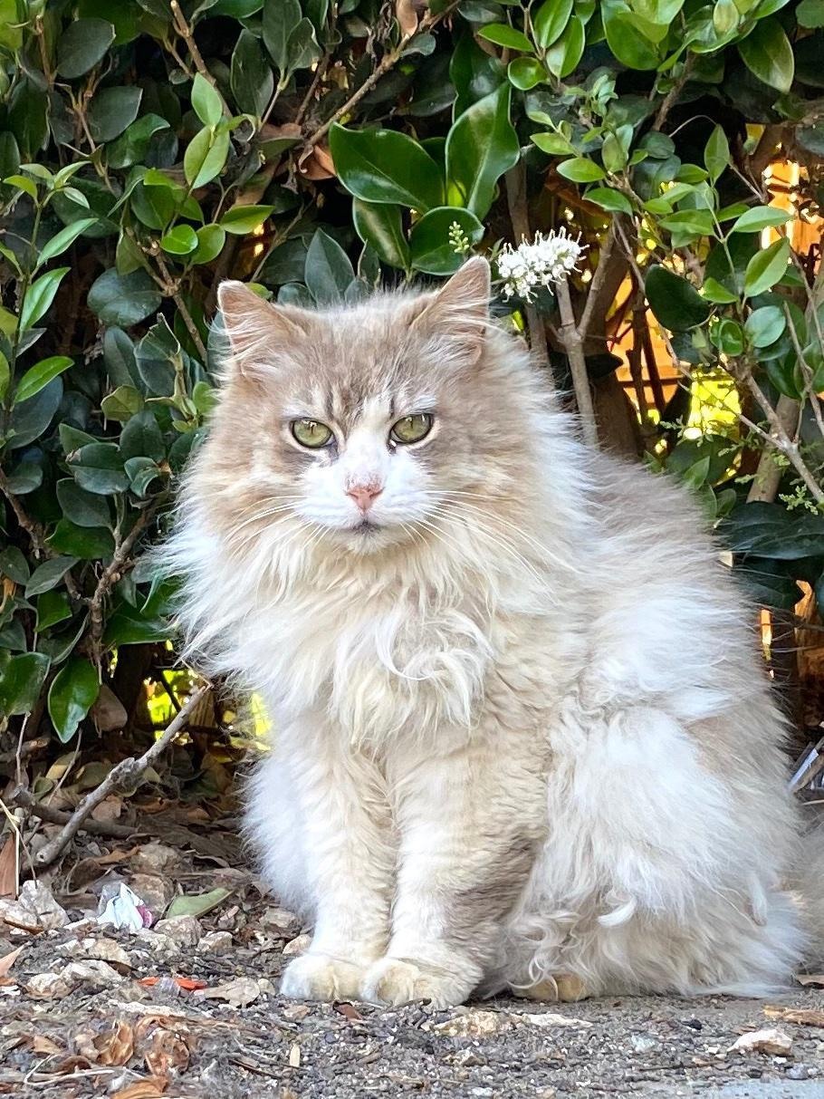 Fluffy Cat by hedge