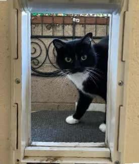 Cat looks through Cat door