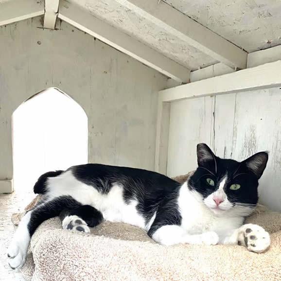 Cat relaxing in henhouse