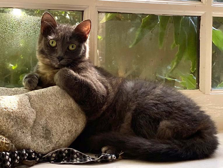 dark colored cat by stone