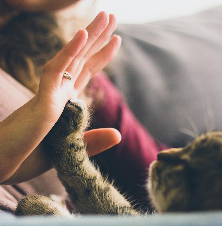 Human - Cat - High-five