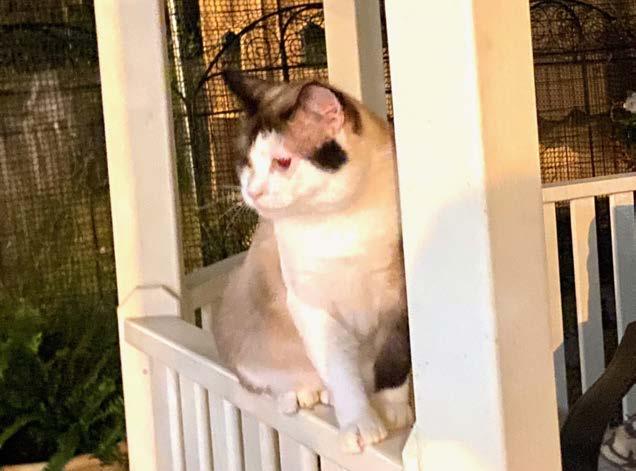 Cat on Gazebo Rail
