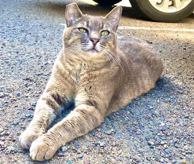 Cat in Parking Lot