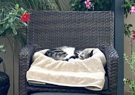 Cat Sleeping in Chair