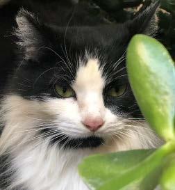 Health Cat - Sheena 1