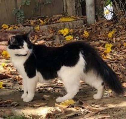 Health Cat - Sheena 2